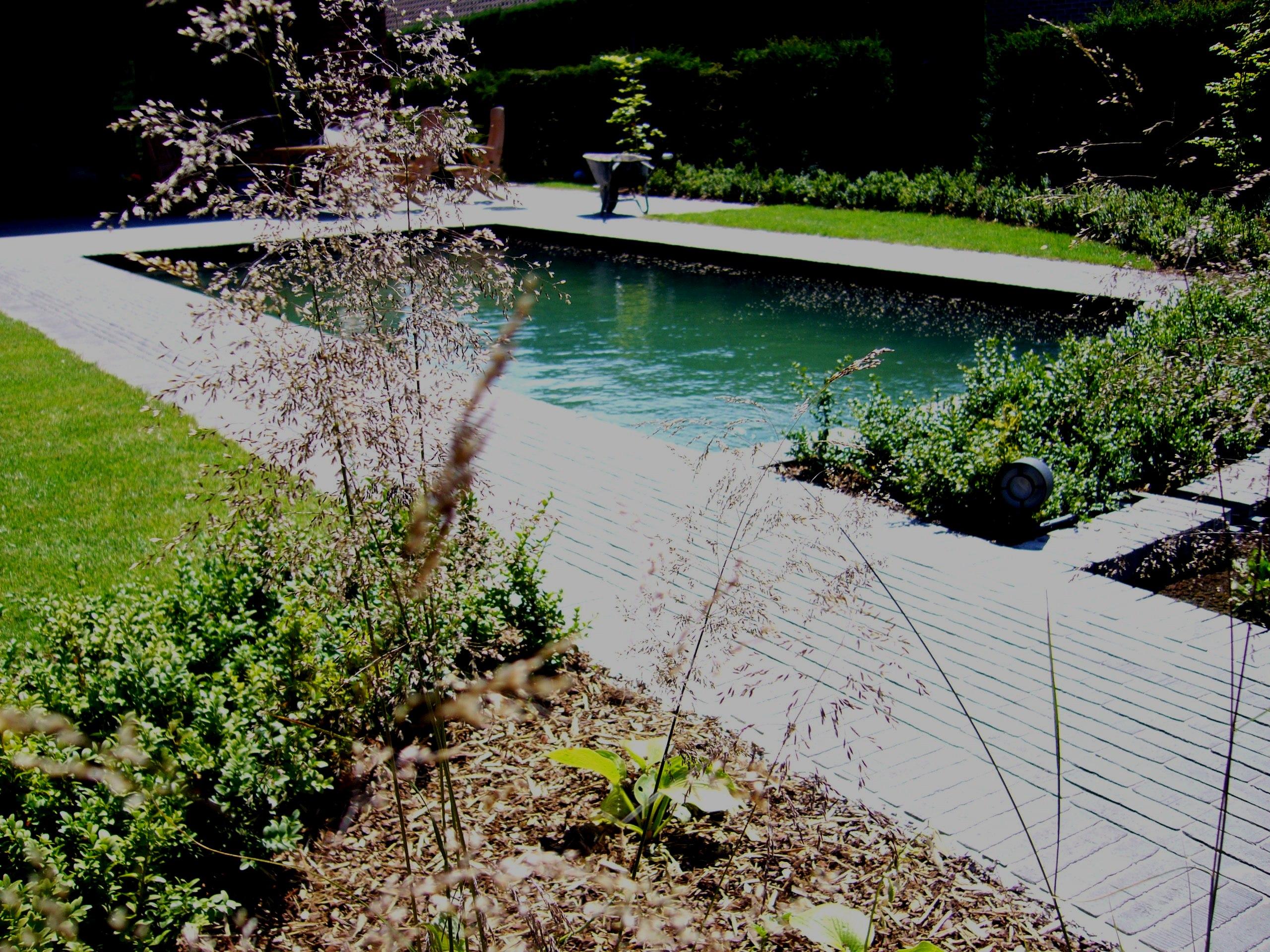 zwemvijver in beplanting