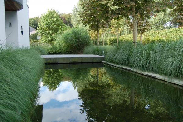 spiegelende grassen in de vijver