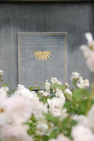 Zonnewijzer tussen de rozen