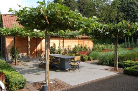 Een terras overdekt met leibomen een natuurlijke parasol